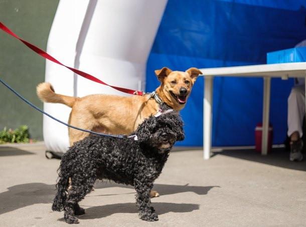 vicente-lopez-vacunacion-antirrabica-mascotas-zoonosis
