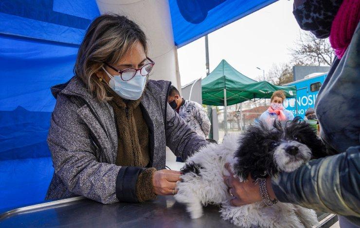 vicente-lopez-vacunacion-mascotas